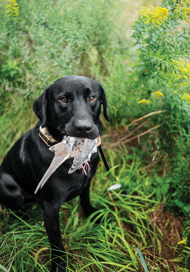Dove Nation: Hunting the Opener in 3 States