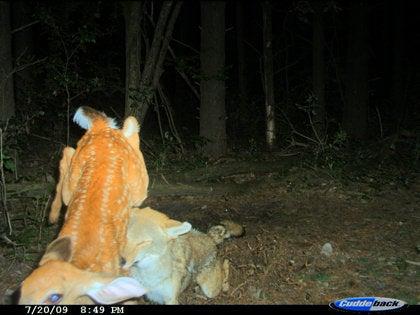 """""""deer"""