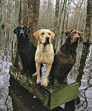 The Best Hunting Dogs for Retrieving, Pointing, Flushing or Scent