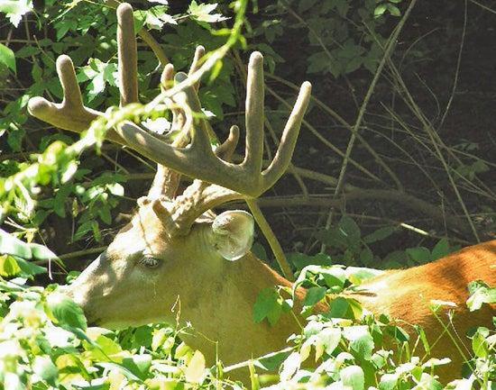 httpswww.outdoorlife.comsitesoutdoorlife.comfilesimport2014importImage2009photo710_Woods_Browse_0.jpg