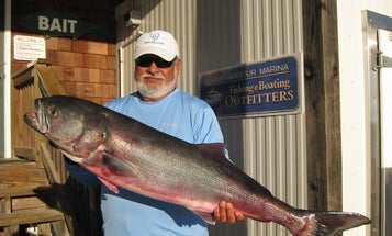 The Fall of Record Bluefish: How to Get In on the Action