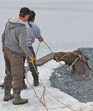 Photos: Fishermen Lasso and Rescue Moose that Fell Through Ice