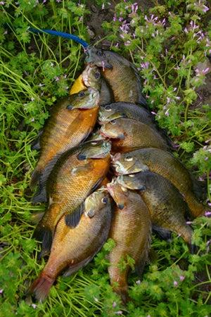 httpswww.outdoorlife.comsitesoutdoorlife.comfilesimport2014importImage2011photo100132157914_70.jpg