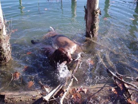httpswww.outdoorlife.comsitesoutdoorlife.comfilesimport2013images2011048_Ethans_first_deer_004_0_0.jpg