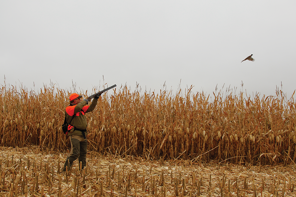 How to Bag a Limit of Pheasants All on Your Own, Even Without a Dog