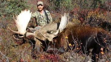 hunter with an alaskan moose