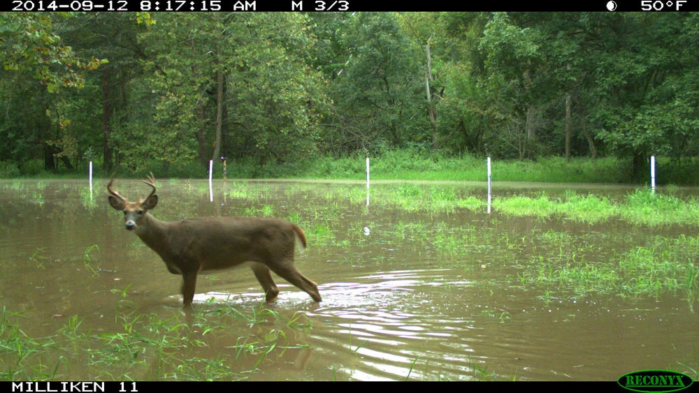 When Things Go Wrong: Food Plots and Trail Cameras vs. The Flood