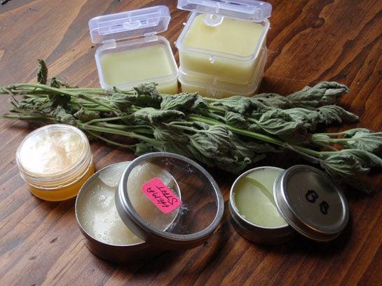 Survival Skills: 14 Wild Medicinal Plants