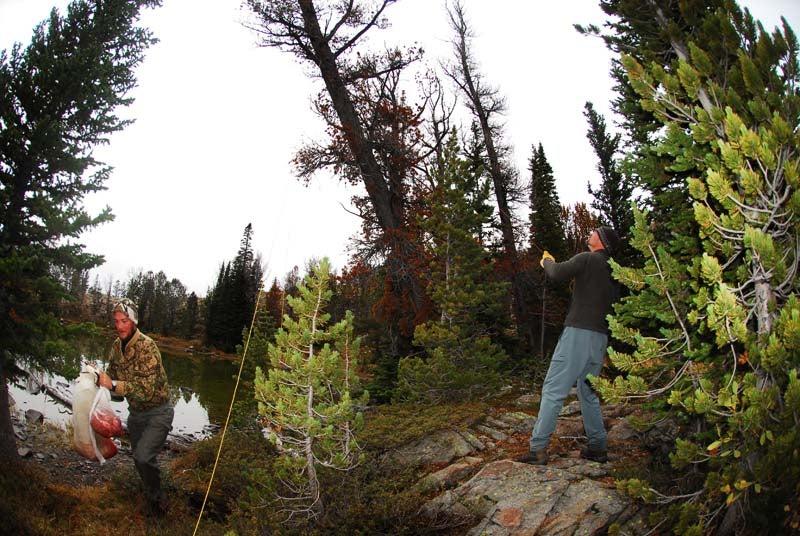 httpswww.outdoorlife.comsitesoutdoorlife.comfilesimport2014importImage2010photo6Goat_31_copy.jpg