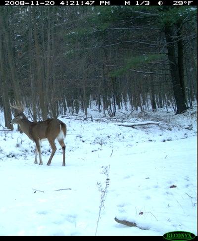 httpswww.outdoorlife.comsitesoutdoorlife.comfilesimport2014importImage2008legacyoutdoorlife125-dec1_deer_forecast_5.JPG