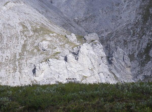 httpswww.outdoorlife.comsitesoutdoorlife.comfilesimport2013images2010107_Yukon3G_0.jpg