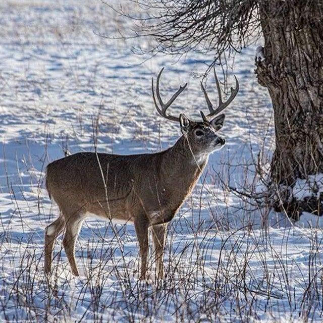 Rut Winds Down, But Best Hunting is Still Ahead