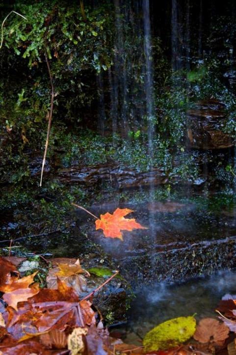 httpswww.outdoorlife.comsitesoutdoorlife.comfilesimport2014importImage2009photo7Decfoliage_62.jpg