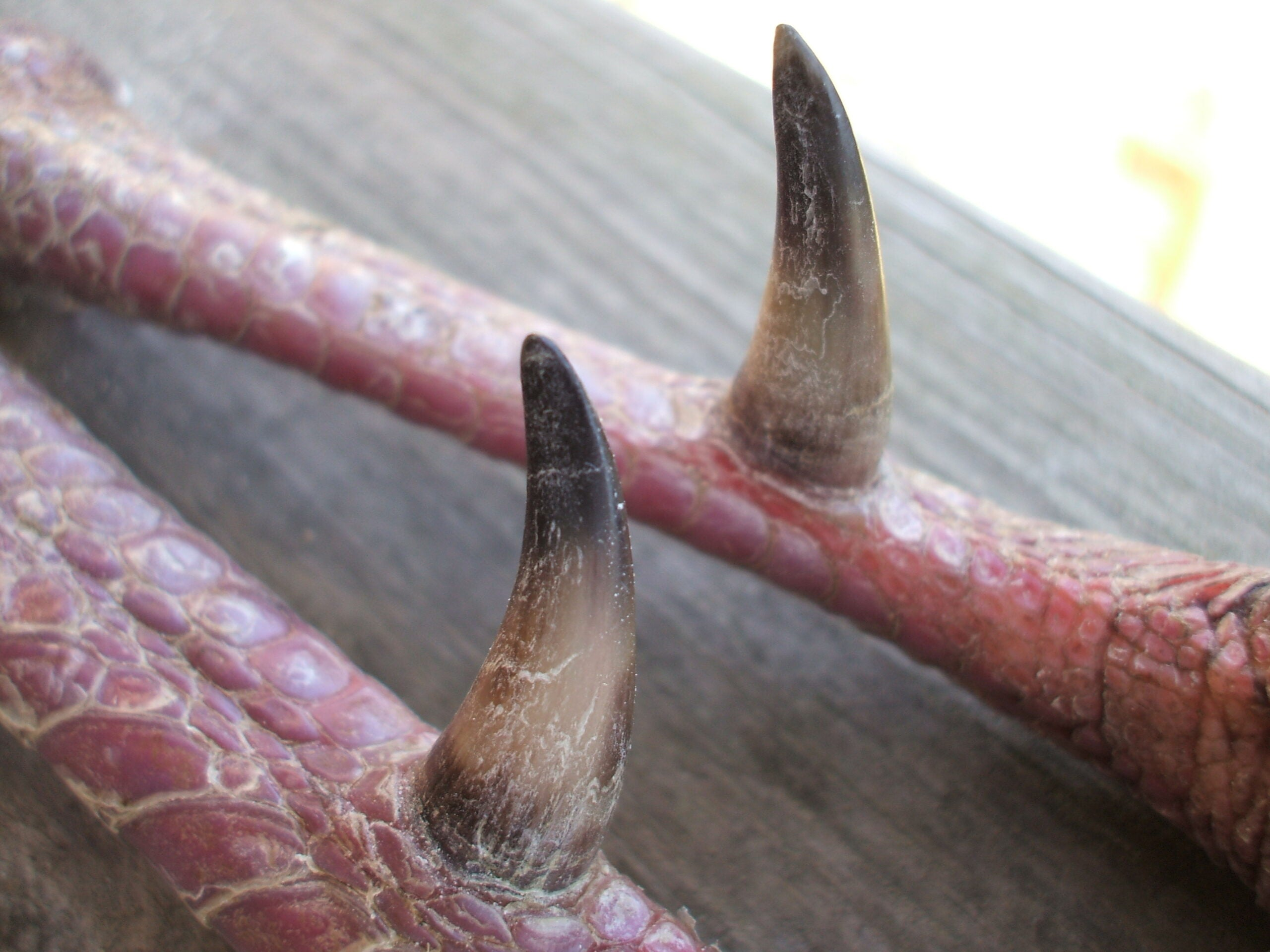 These Spurs Are Made For Mounting