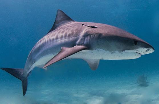 Shark Attacks Are at a 12-Year High in U.S.