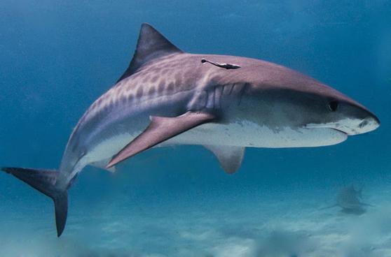 Champion Bodyboarder Killed in Shark Attack