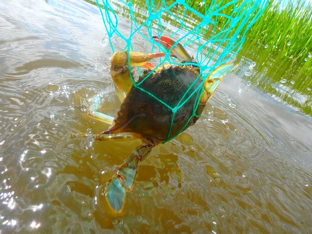 saltwater fishing, crabbing, crab fishing, outdoors, crab net, scoop net
