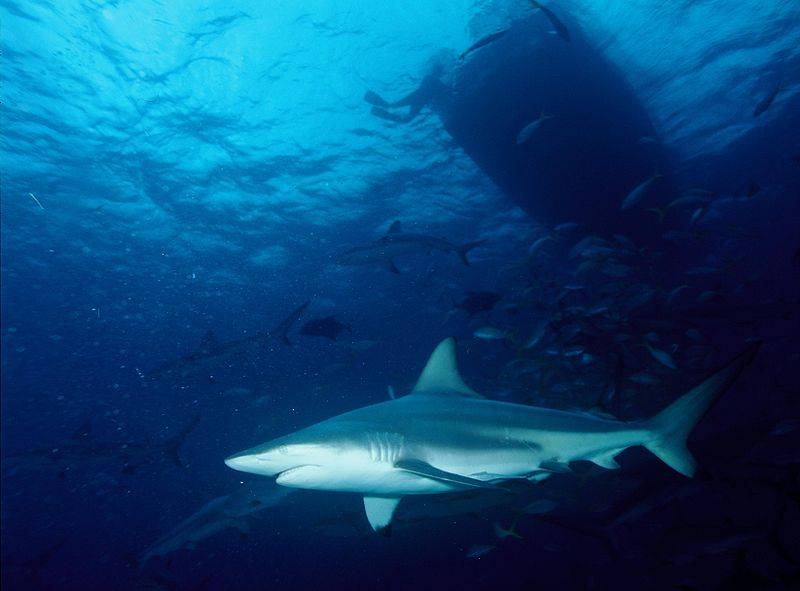 Border Battle Turns to Shark Fishing