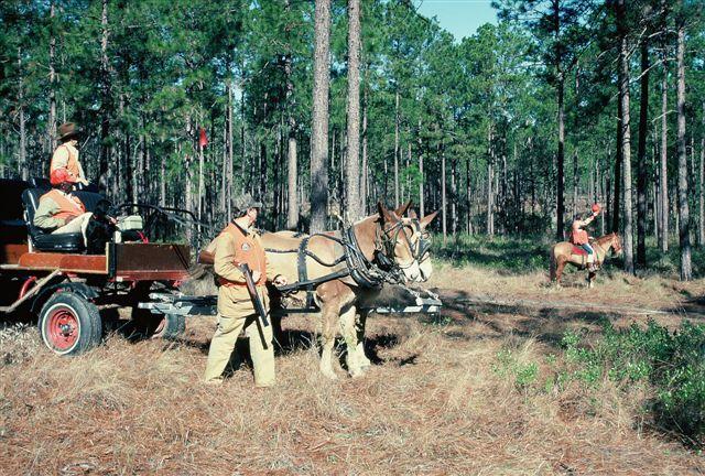 httpswww.outdoorlife.comsitesoutdoorlife.comfilesimport2014importImage2009photo721._North_Carolina.jpg