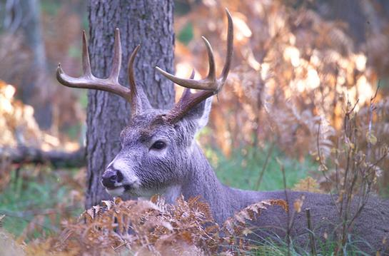 Study: One Sit in the Deer Woods Equals Three Days of Pressure for Mature Bucks