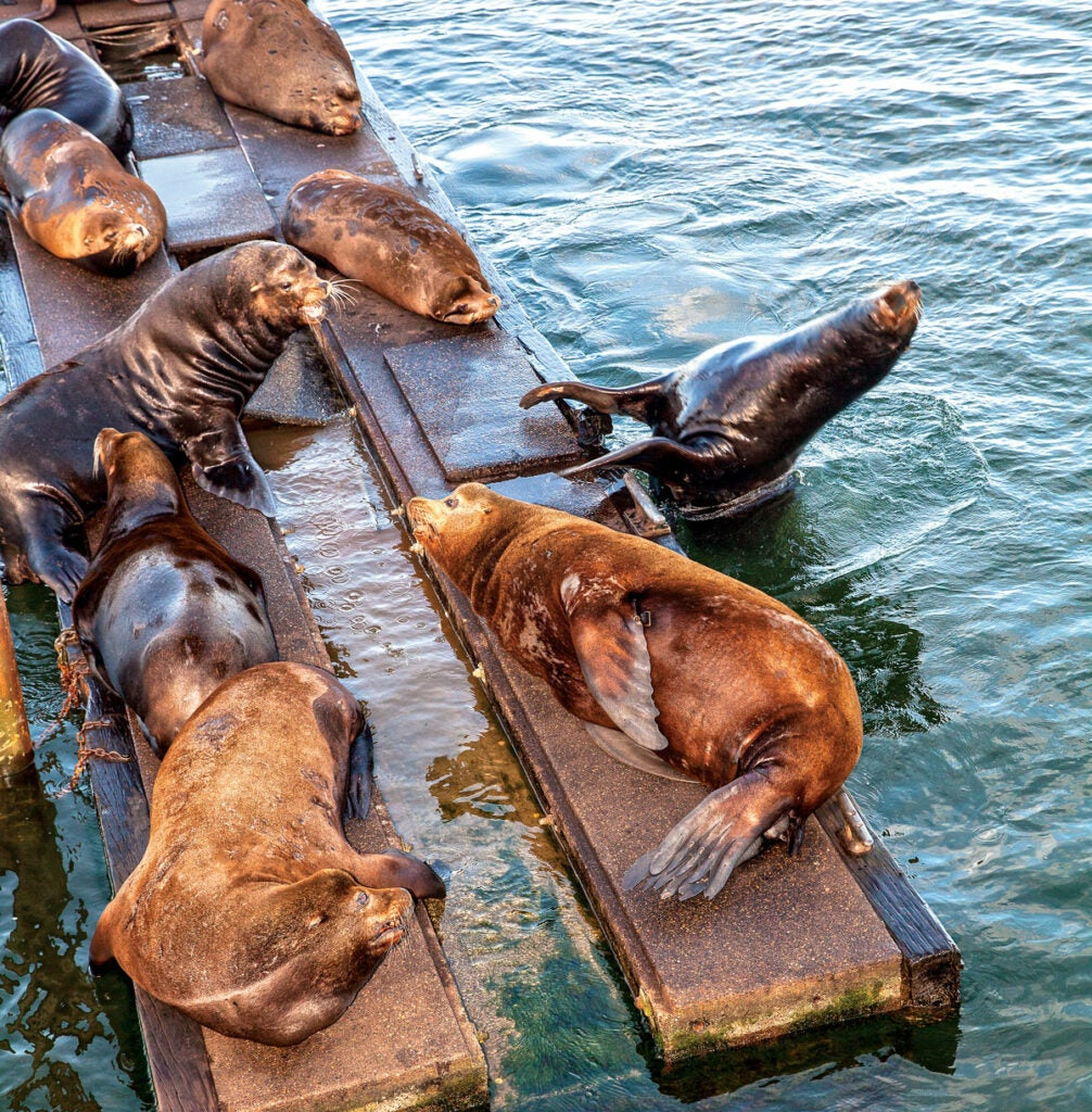 httpswww.outdoorlife.comsitesoutdoorlife.comfilesimport2015bite-sea-lions.jpg