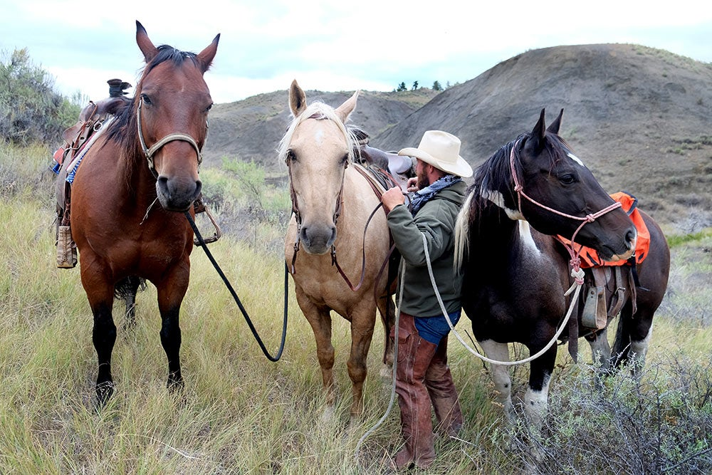 hunter tending to three horses