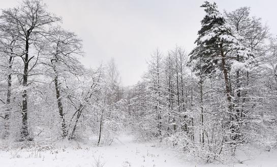 How to Judge Winter Impact in Your Deer Woods