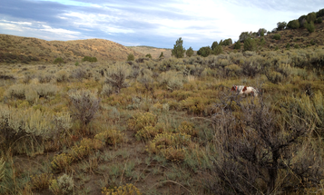 Colorado's Big Secret: Public Hunting Land That's Closed to Public Hunting