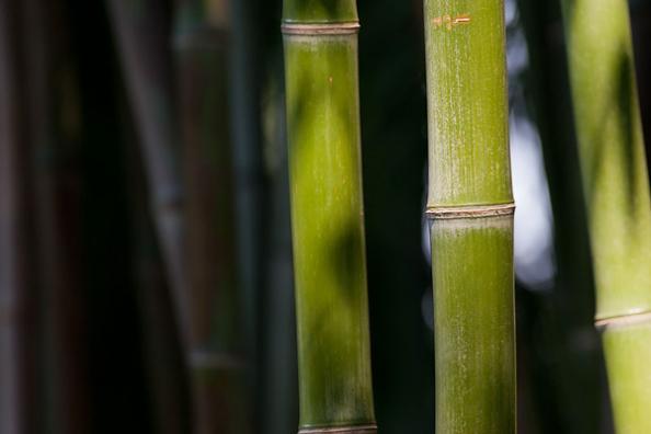 Survival Skills: 10 Ways to Use Bamboo