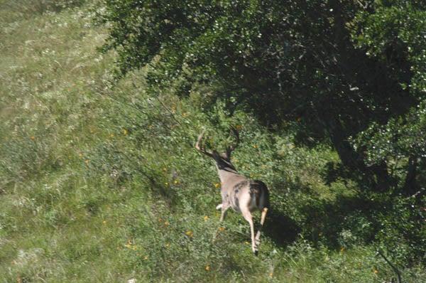 httpswww.outdoorlife.comsitesoutdoorlife.comfilesimport2014importImage2010photo30010FordRanch_176.jpg