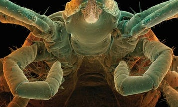 Beware Babesiosis: New Tickborne Disease a Threat to Outdoorsmen