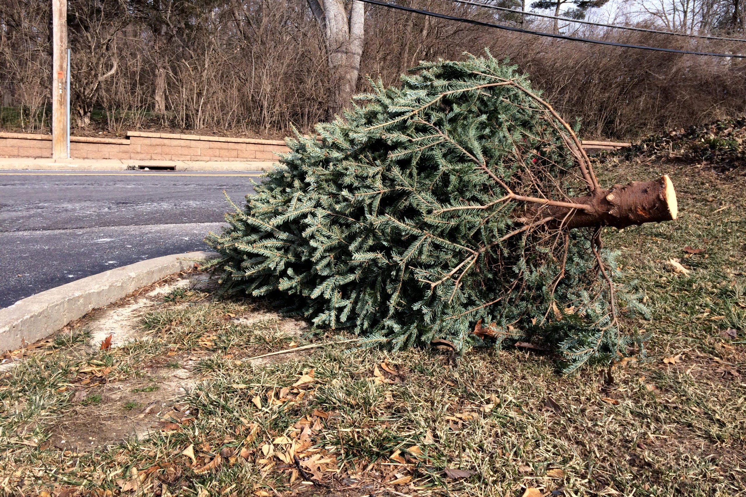 5 Survival Uses for a Recycled Christmas Tree