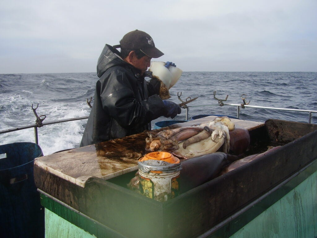 Information for squid fishing
