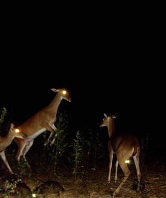 The 25 Best Trail Camera Photos from OL Readers