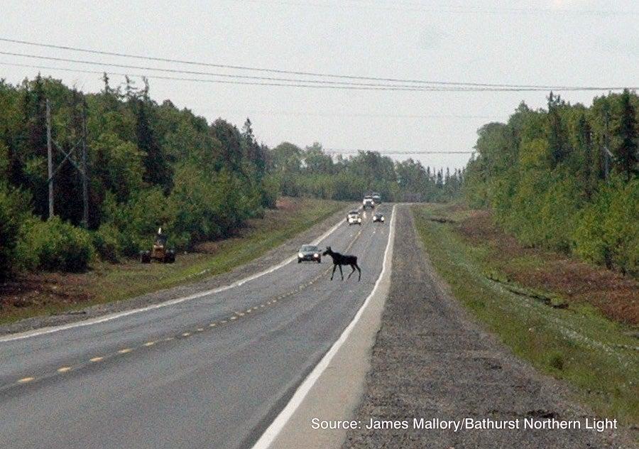 httpswww.outdoorlife.comsitesoutdoorlife.comfilesimport2014importImage2009photo6Rte11-Moose-Fencing-B2-W900.jpg