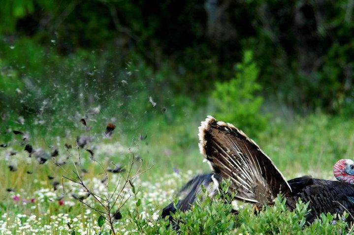 httpswww.outdoorlife.comsitesoutdoorlife.comfilesimport2014importImage2010photo300105_Tom_with_Decoy_4.jpg