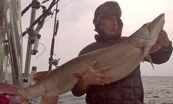 Big Fish Alert: New Possible World-Record Muskie