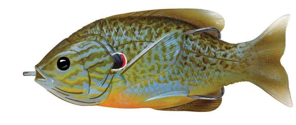 httpswww.outdoorlife.comsitesoutdoorlife.comfilesimport201520150712LiveTarget20Sunfish.jpg