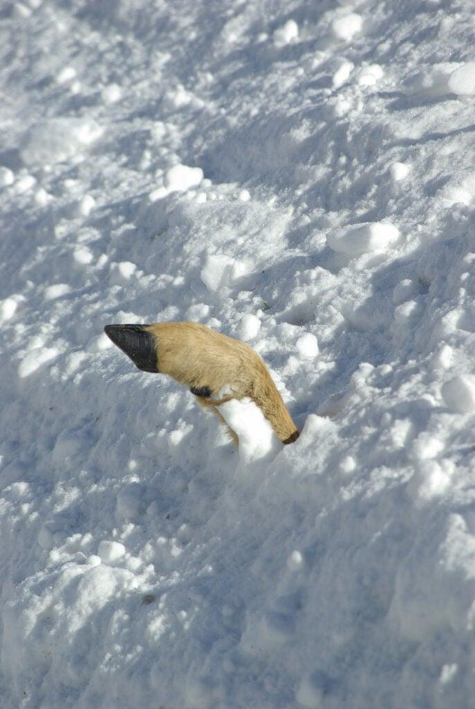winter deer losses