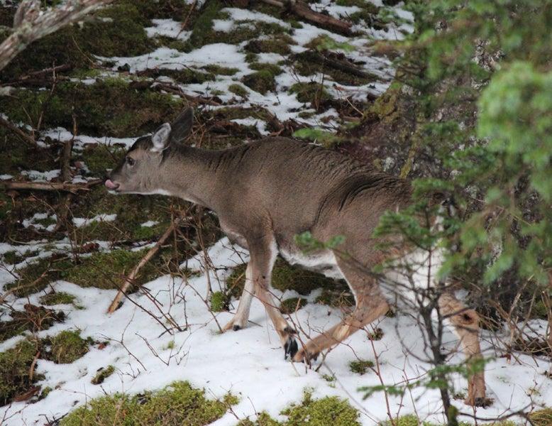 httpswww.outdoorlife.comsitesoutdoorlife.comfilesimport2013images20121221.jpg