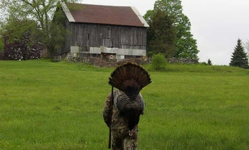 What's Wrong With Your Turkeys?
