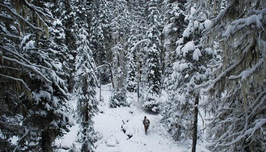 Winter Survival Do's And Don'ts