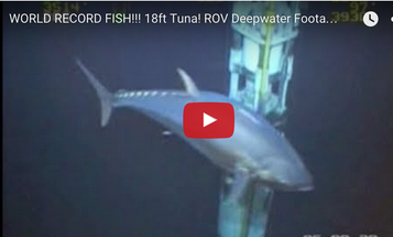 Video: What's the Right Tackle to Fight this Gigantic Bluefin Tuna?