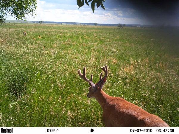 httpswww.outdoorlife.comsitesoutdoorlife.comfilesimport2013images201007RQ12_0.jpg