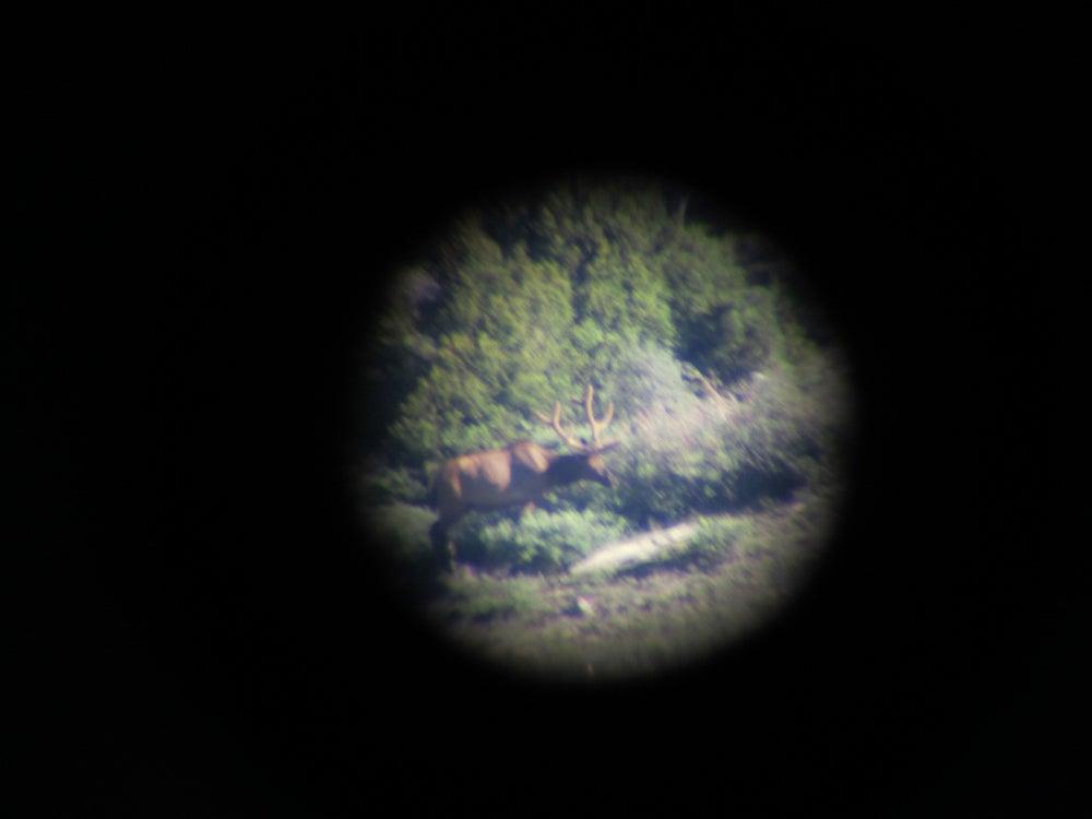 Live Hunt: Summer Elk Scouting