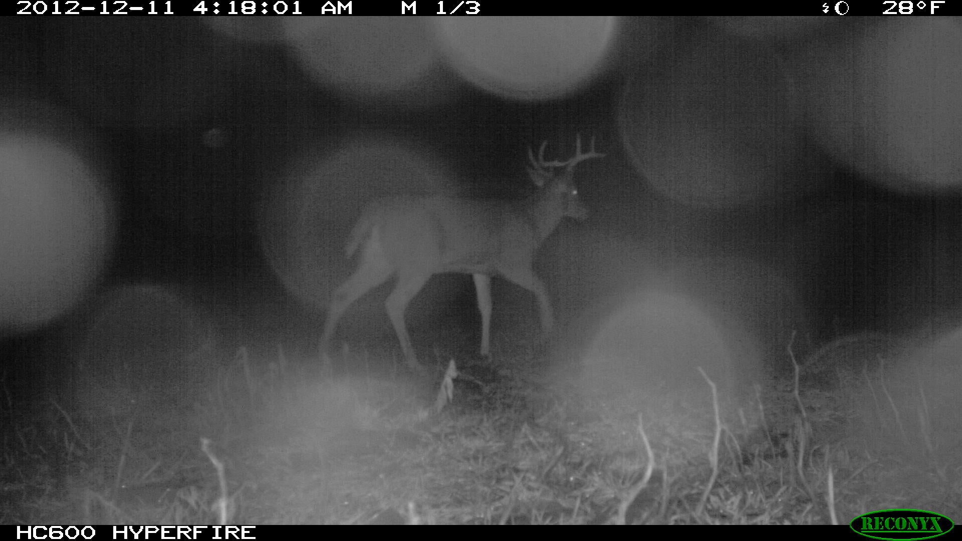 Rut Tracker: Trail Camera Photos December 20