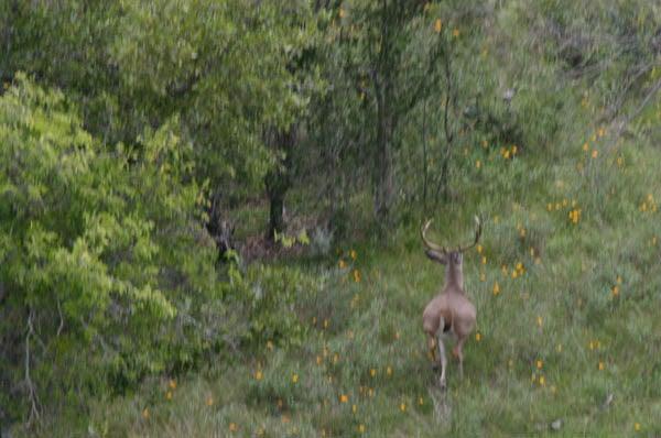 httpswww.outdoorlife.comsitesoutdoorlife.comfilesimport2014importImage2010photo30010FordRanch_111.jpg