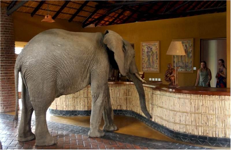 BIZARRE PHOTOS! The Elephant Walk