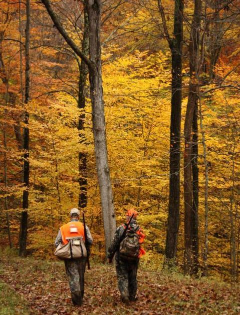 Fall Foliage Contest