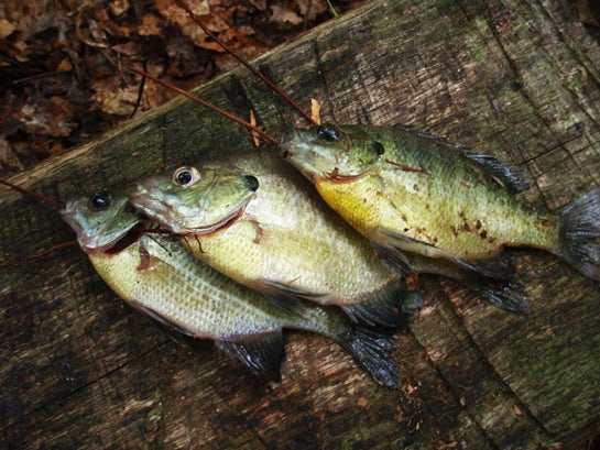 Survival Fishing Kit: Fish Like Your Life Depends on it
